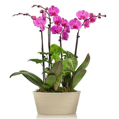 Orchid Garden Planter