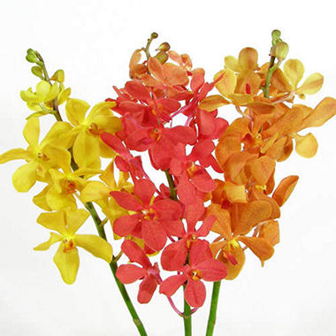 Orchid - Mokara Assorted - 60 Stems