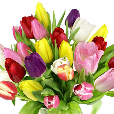 Tulips - Assorted - 100 Stems