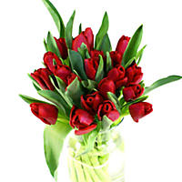 Tulips - Red - 100 Stems