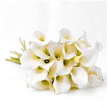 Mini Calla Lily - White - 150 Stems