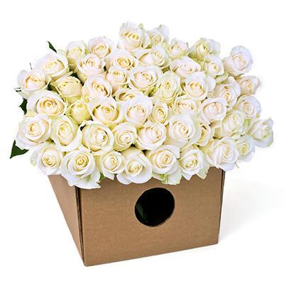 Roses - White (200 Stems)