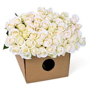 Roses - White (200 Stems)