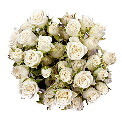 Spray Roses - White - 100 Stems