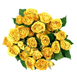 Spray Roses - Yellow (100 Stems)