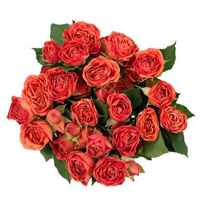 Spray Roses - Orange - 100 Stems