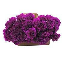 Carnations are beloved around the world for their beautiful ruffled petals, wide variety of colors, and surprising longevity. From special occasion to just because, Carnations are always a fitting flower. Please have someone available to receive and process the flowers on the delivery date. Please read Order Cancellation, Warranty and Important Delivery Information policies. Floral Tips & Ideas Explore our easy tips for arranging just-shipped flowers into stunning bouquets, plus get pointers for keeping your blooms looking beautiful longer. Flower Arranging Tips & Ideas 6 Ways to Make Flowers Last