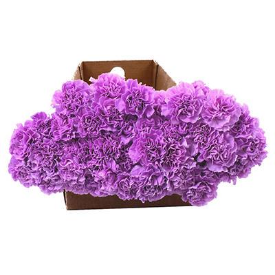 """""""Florigene"""" Moonaqua Carnations - 140 Stems"""