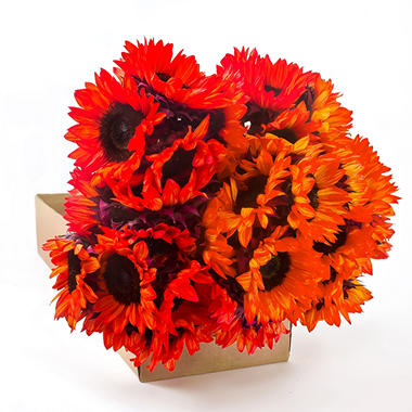 Sunflowers - Tinted - Red & Orange - 80 Stems