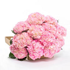 Hydrangeas - Airbrushed - Pink - 20 Stems