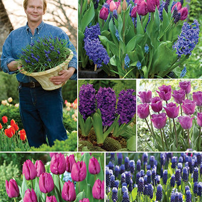 """Royal Jubilee"" Bulb Collection - 50 Total Bulbs"
