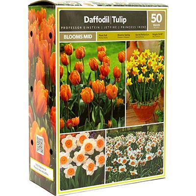 Daffodil/Tulip - Package of 50 Dormant Bulbs