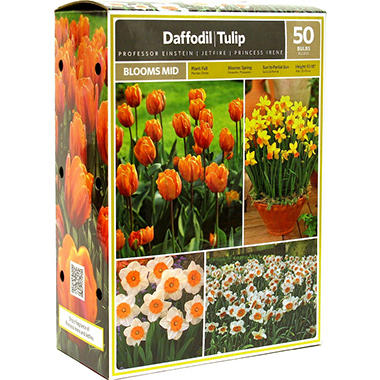 Daffodil/Tulip - Package of 50 Dormant Bulbs
