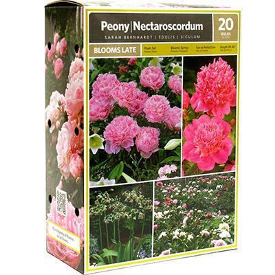 Peony/Nectaroscordum - Package of 20 Dormant Bulbs