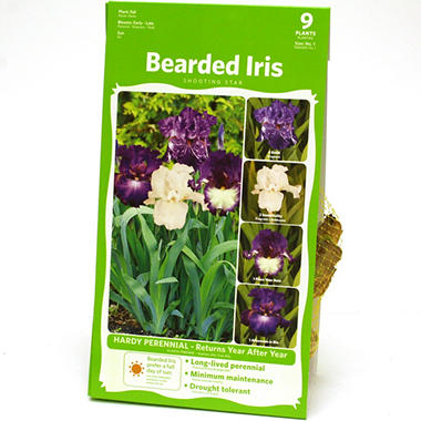 Bearded Iris Purple Collection - package of 9 dormant rhizomes