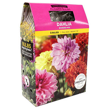 Dahlia Border Mix Bulbs
