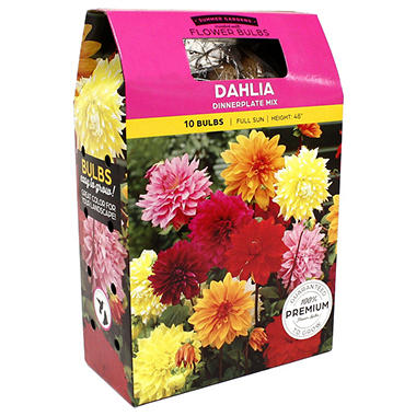 Dahlia Dinnerplate Mix Bulbs