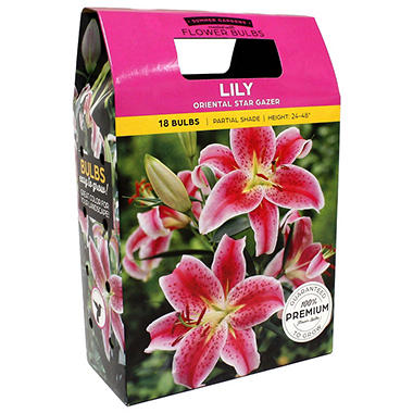 Lily Oriental Stargazer/Yellow Dream Bulbs