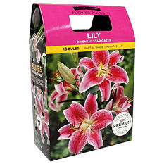 Lily Oriental Stargazer/Yellow Dream Bulbs