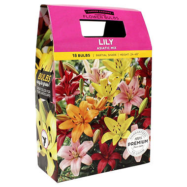 Lily Asiatic Mixed Bulbs