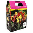 Canna Mixed Bulbs