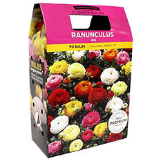 Anemone/Ranunculus Mixed Bulbs