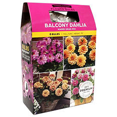Dahlia Mardi Gras Mix - Package of 10 Dormant Dulbs
