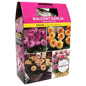 Dahlia Mardi Gras Mix - Package of 10 Dormant Bulbs
