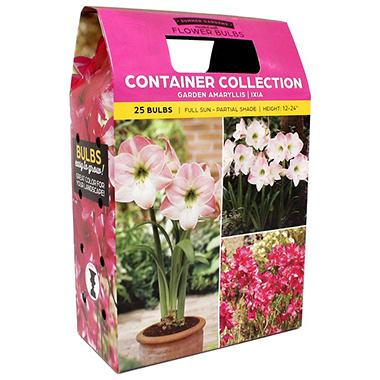 Garden Amaryllis/Ixia Pink - 30 dormant bulbs