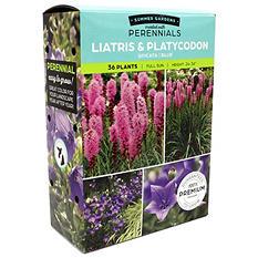 Liatris Spicata/Platycodon Blue