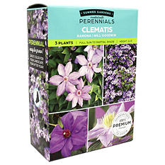 Clematis Combo