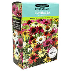 Echinacea Butterfly Mix
