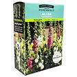 Alcea Hollyhock Mixed