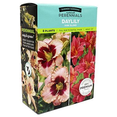 Daylily Pink Blend - 9 dormant plants