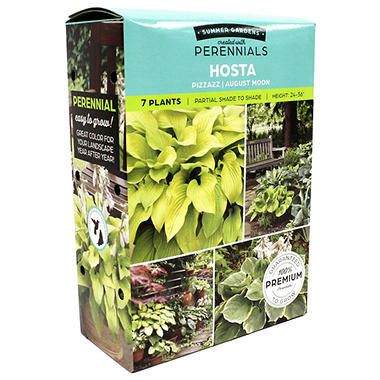 Hosta/Heuchera - Package of 8 Dormant Plants