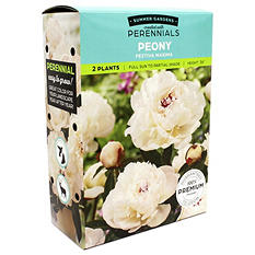 Peony/Phlox - Package of 9 Dormant Plants