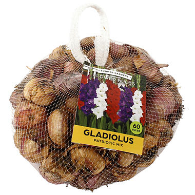 Patriotic Mix Gladiolus - 75 Dormant Bulbs