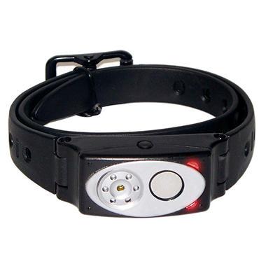 Coonhound Dog Collars