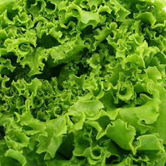 Green Leaf Lettuce - 24 ct. case