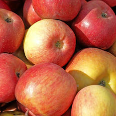 Pink Lady Apples - 4 lbs.