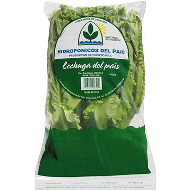 Hidroponicos del Pais Country Lettuce