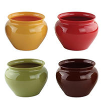 Special Offer 4 1/2″ Jardiniere – Safari Assortment (24 ct.) Before Special Offer Ends