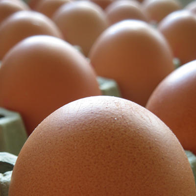 Oakdell Organic Large Brown Eggs (12 ct.)