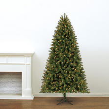7.5' Member's Mark Artificial Pre-Lit LED Scotch Pine Quick Set Simple Shape Christmas Tree