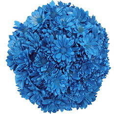 Poms - Tinted Turquoise - 60 Stems