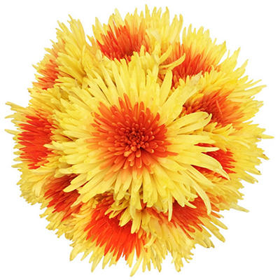 Innie/Outtie Disbuds - Orange and Yellow - 60 Stems