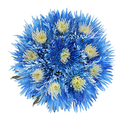 Innie/Outtie Disbuds - Blue and White - 60 Stems