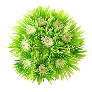 Innie/Outtie Disbuds - Lime Green and White - 60 Stems