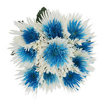Innie/Outtie Disbuds - Turquoise and White - 60 Stems