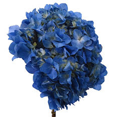 Elite Hydrangeas - Blue - 15 Stems